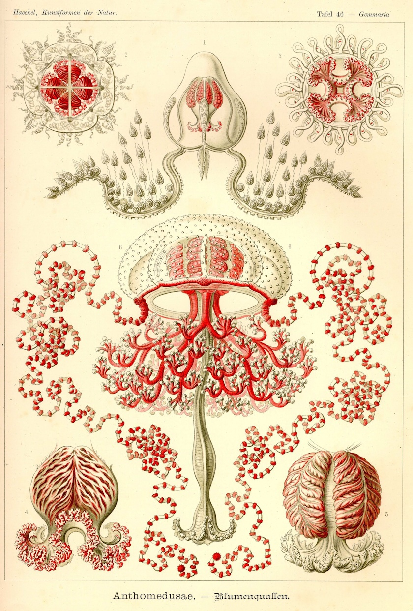 the art and science of ernst haeckel pdf