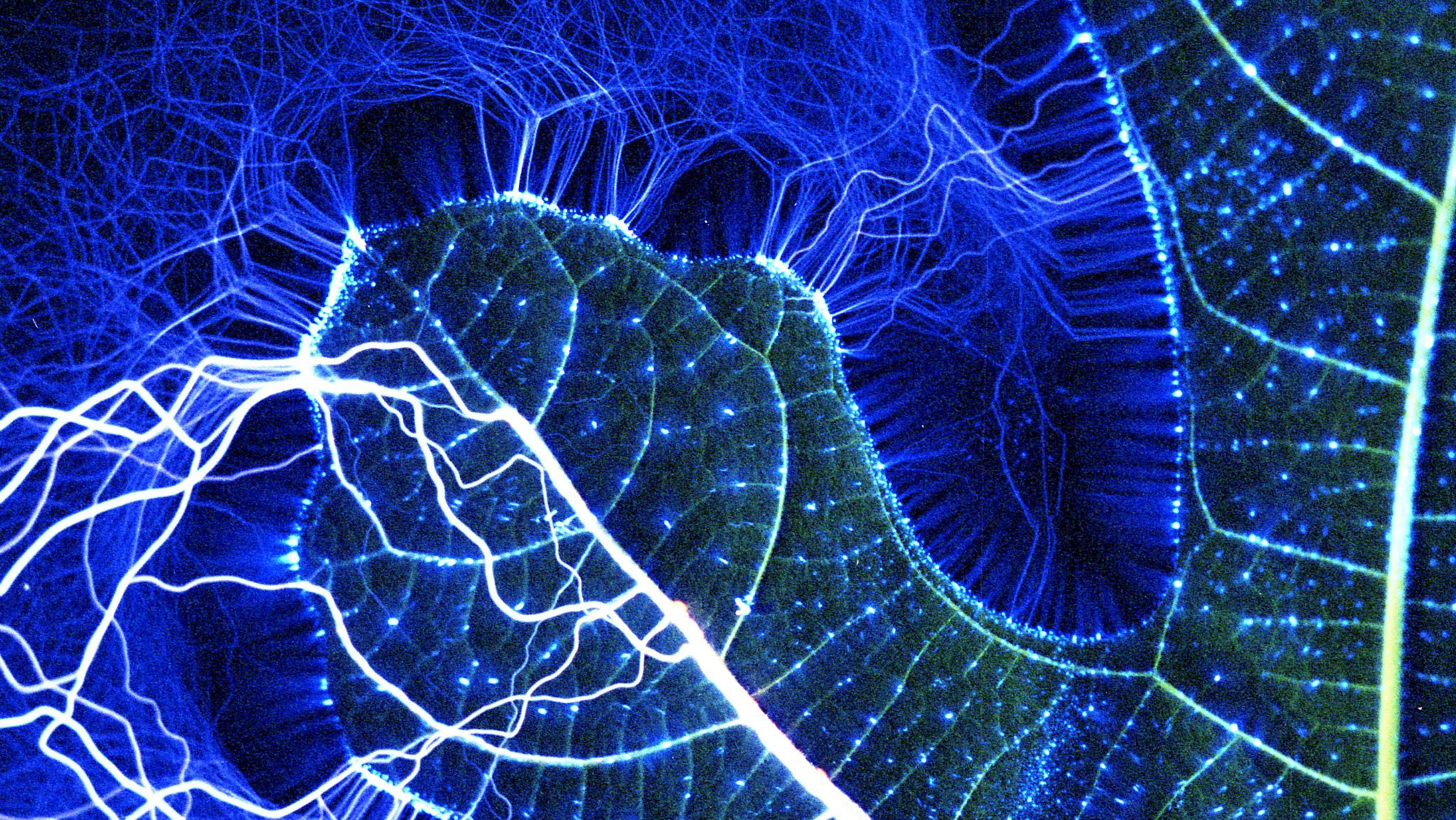 how to take kirlian photography