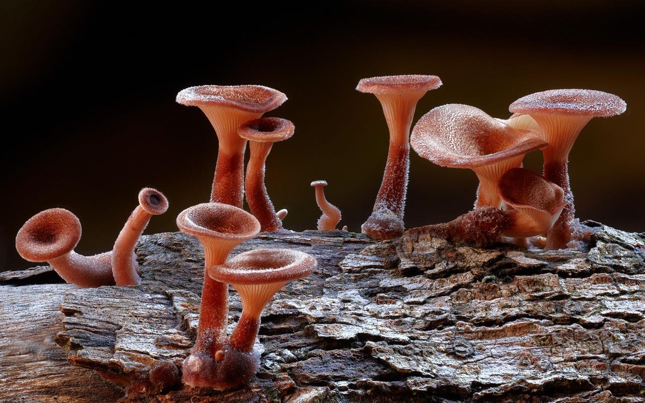 дай бог, фото всех грибов мира единственная его